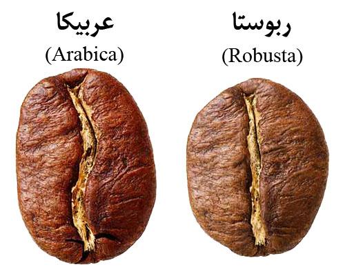 گونه های قهوه